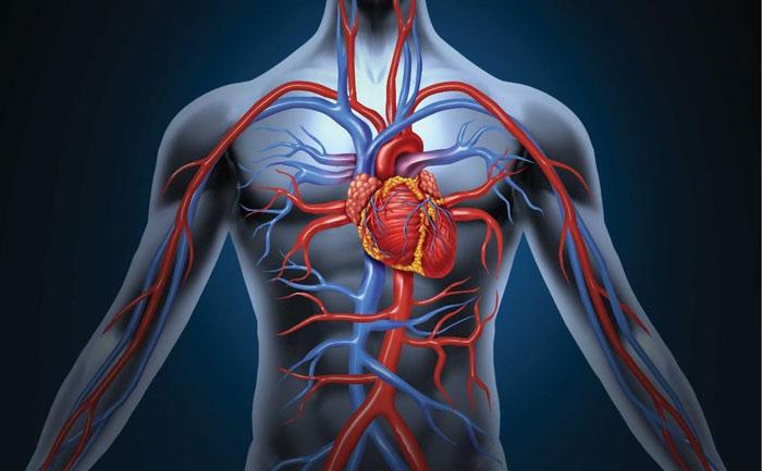 اطلاعاتی درباره گردش ضعیف خون